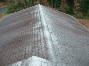 Roof Cleaning Amp Mold Removal Sparkle Wash St Mary S